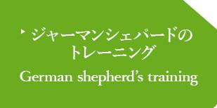 ジャーマンシェパードの トレーニング